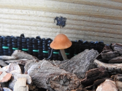 Another new mushroom, what is it?